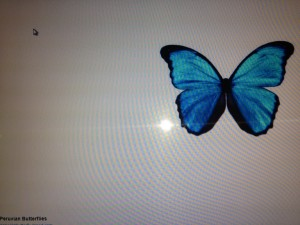 bluebutterfly copy